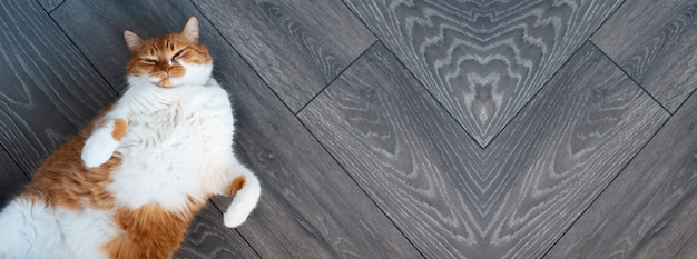Indoor portrait of cute fluffy red and white cat, lying on the dark grey wooden floor, with paws up. panoramic banner view.