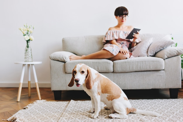 Indoor portrait of elegant black-haired girl relaxing on sofa with cute beagle dog on foreground