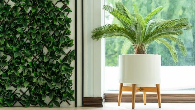 室内の鉢植え、隣の朝の窓。装飾的な手のひら。