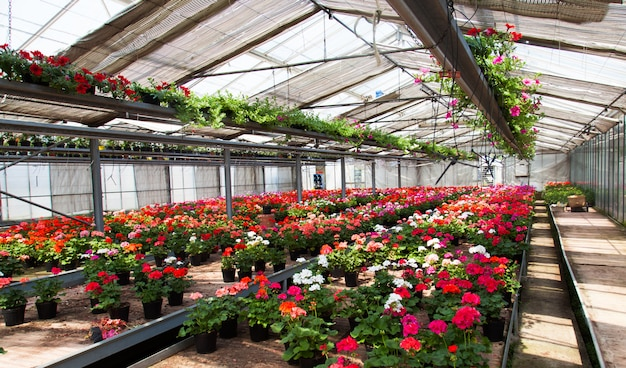Indoor shot of a greenhouse full of flowers