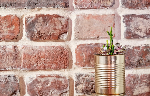 Indoor succulent plant in a tin can pot. zero waste, item recycling idea. side view on an old brick wall. banner with copy space.