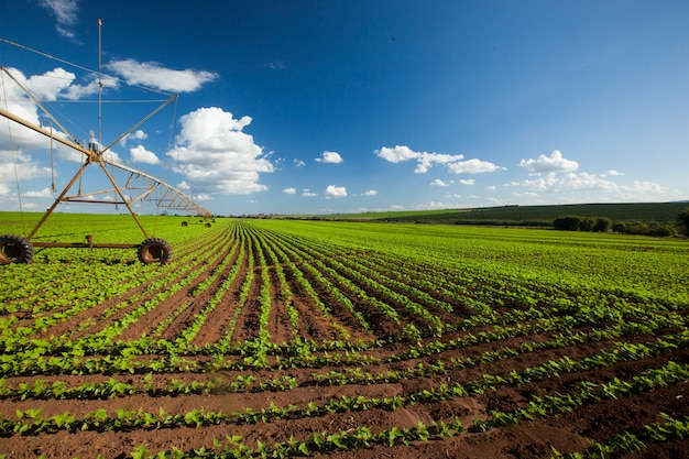 Industrial irrigation equipment on farm field under a blue sky in brazil. agriculture.