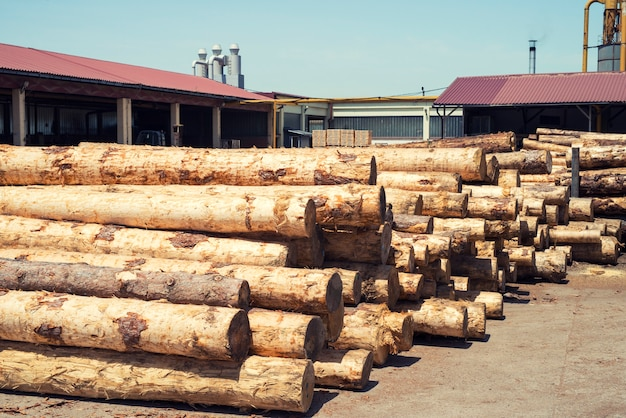 Industrial wood working factory with tree trunks ready to be cut
