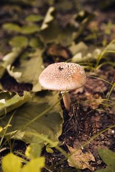 Inedible mushroom in woods