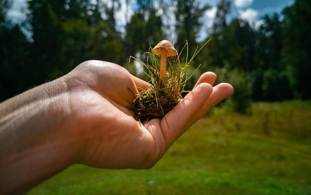 Несъедобные грибы рука держит грибную поганку на ладони опасные грибы в