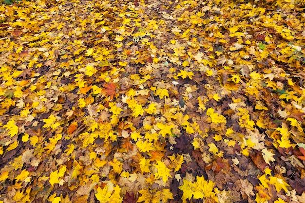 樹木や他の植物の例に対する自然への秋の季節の影響と影響