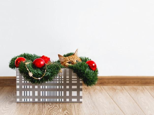 クリスマスと新年の装飾ボックスで横になっているかわいい生inger猫。ふわふわのペットがそこで遊んでいます。