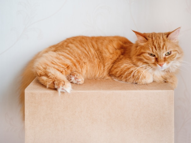 カートンボックスに横たわっているかわいい生inger猫。