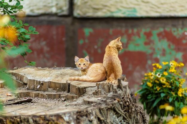 野生の生ingerの子猫が木の庭で休んでいます。