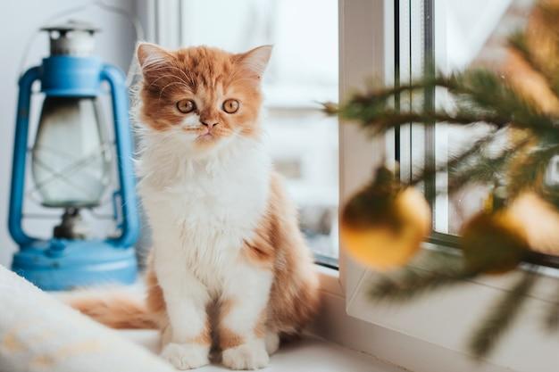 ふわふわ生inger子猫は窓辺に座っています。