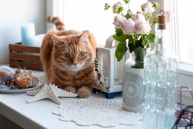 窓辺に座っているかわいい生inger猫。