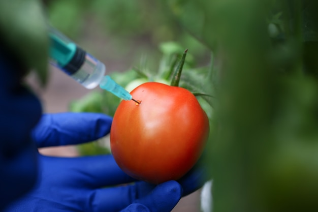Injection vegetable for quick ripening tomato.