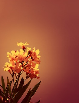 自然の背景の上にインク色のソフトフォーカスの花の木。花の花インクフィルター