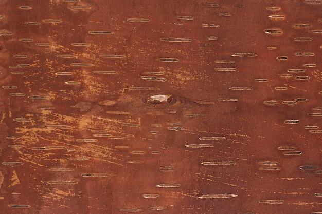 Inner side of birch bark