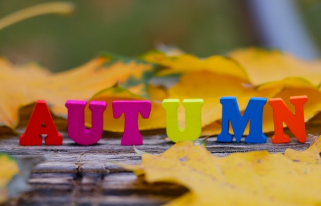 Inscription of colored wooden letters autumn on maple yellow leaves