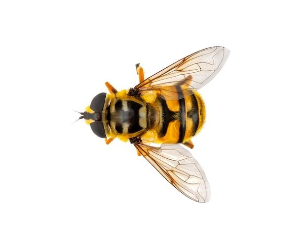 白い背景の上の昆虫蜂マクロ分離