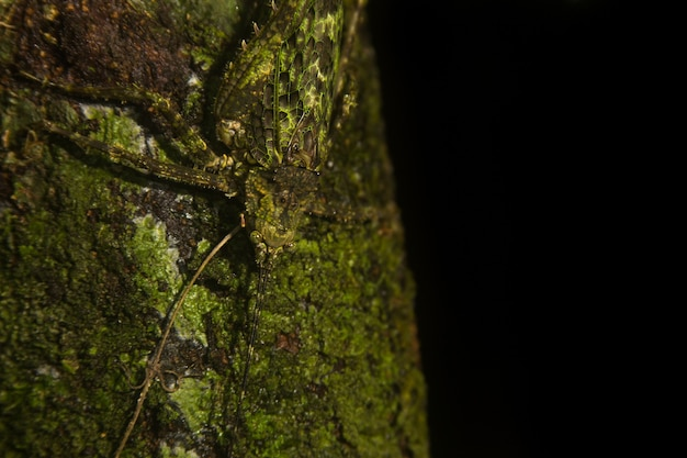 Insect camouflages itself in nature