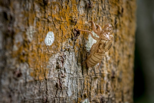 Insect cicada body change