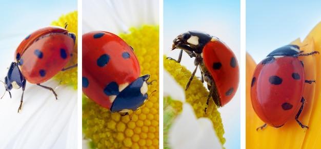 花の昆虫てんとう虫