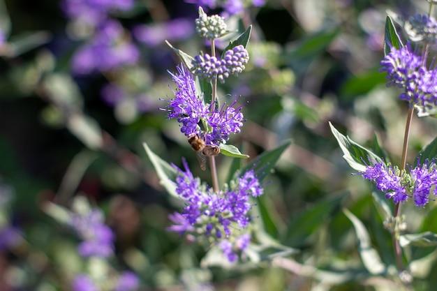 庭の美しい紫の花の昆虫