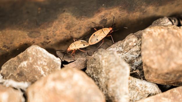 Insects are breeding. small arthropod animals.