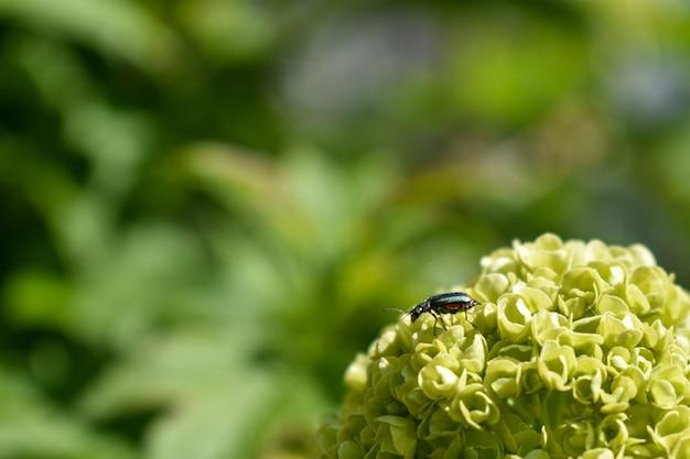 森の木の枝の昆虫