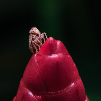 赤い花の昆虫