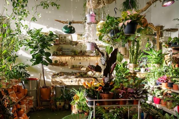 내부 꽃과 빈티지 장식은 화분 상록 식물 세라믹 장식의 선반을 저장합니다.