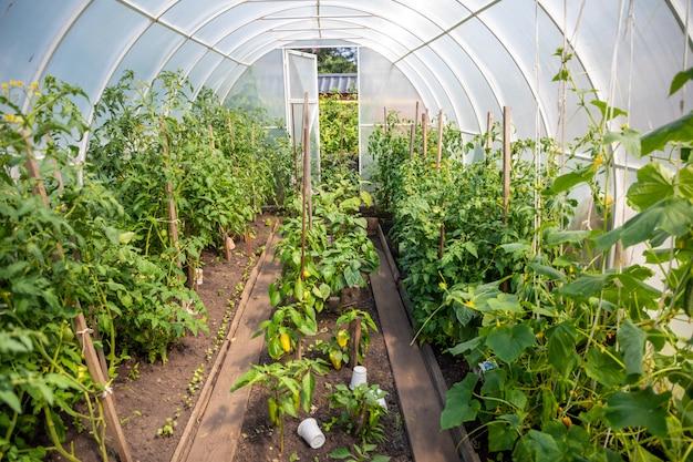 가정 정원에서 식물과 개인 온실 내부