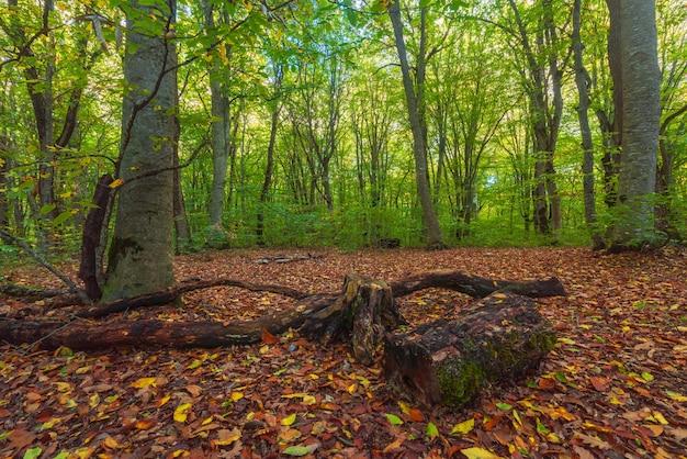 Внутри зеленого леса
