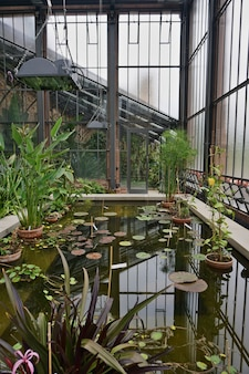 Inside view of the greenhouse of a botanical garden.