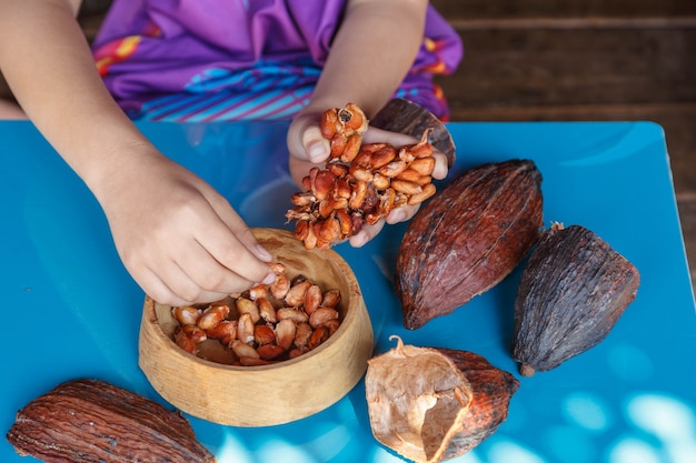 カカオ豆の選別を検査する