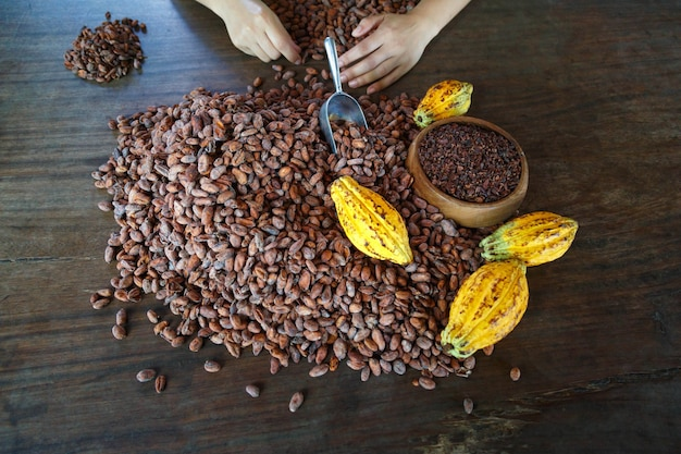 Inspecting cocoa beans for quality by hand