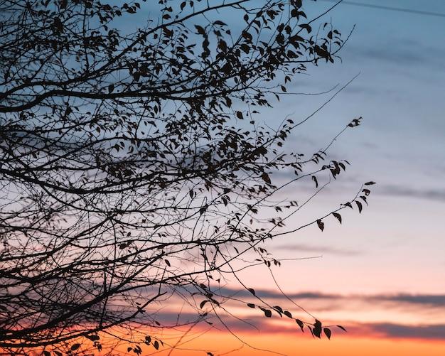 朝の光の感動的な景色