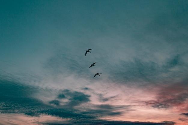 일출 빛의 감동적인 전망