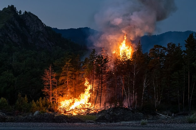 Intense flames from a massive forest fire at night.