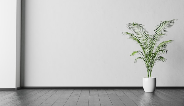 Interior background with white wall and plant