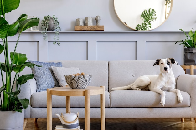 Interior design of living room with stylish grey sofa, coffee table, tropical plant, mirror, decoration, pillows and elegant personal accessories in home decor