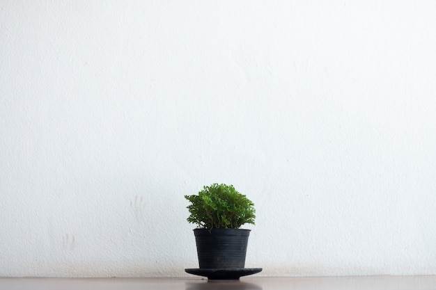 Interior green plant tree leaf in white pot small decorative on wooden table