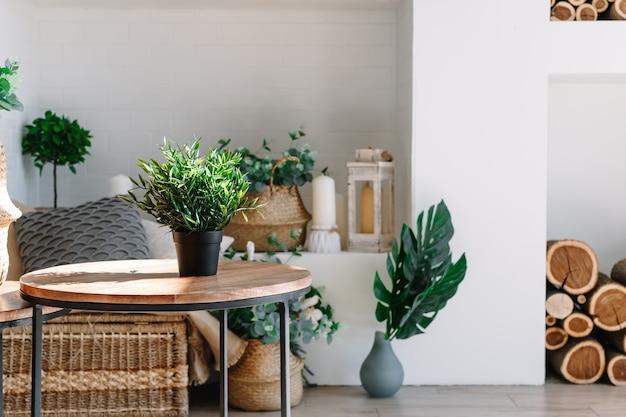 커피 테이블과 식물이있는 스칸디나비아 스타일의 밝은 거실 인테리어.