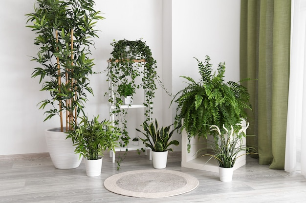 녹색 실내 화분 용 화초가있는 현대적인 객실의 인테리어
