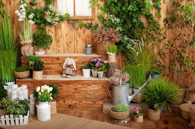 The interior of spring yard. patio of a wooden house with green plants in pots. gardening on steps of house. rustic terrace. country house veranda in spring decoration. easter. growing potted plants.