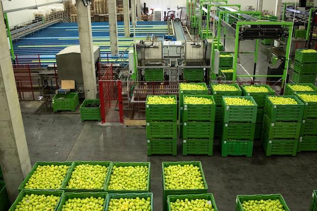사과 세척 및 분류 기계가있는 과일 가공 공장의 내부보기.