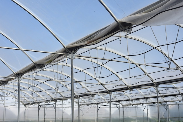 스프링클러 관개가있는 온실 내부 구조