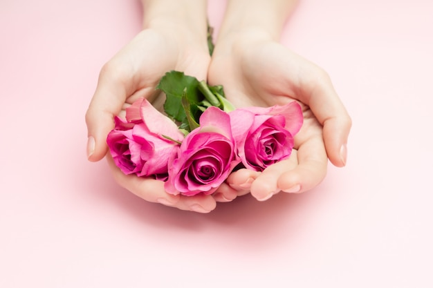 International women's day, mothers day concept. the woman hands hold rose flowers on a pink surface. a thin wrist and natural manicure.