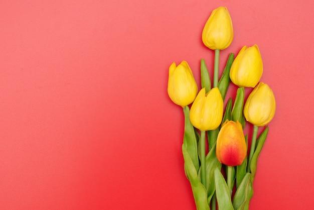 빨간색 배경에 튤립 꽃과 국제 여성의 날