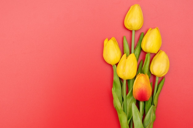 International women's day with tulip flowers on red background