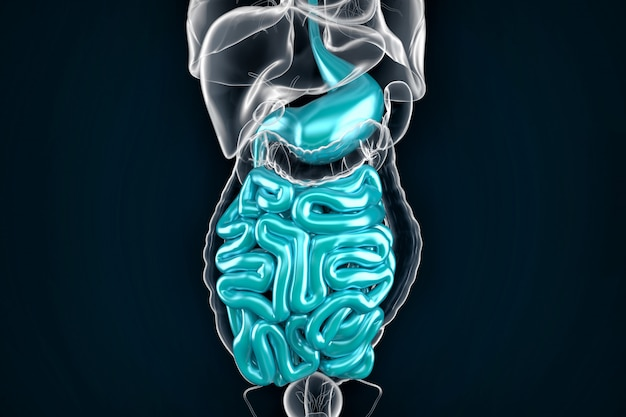 Intestine. 3d illustration. contains clipping path