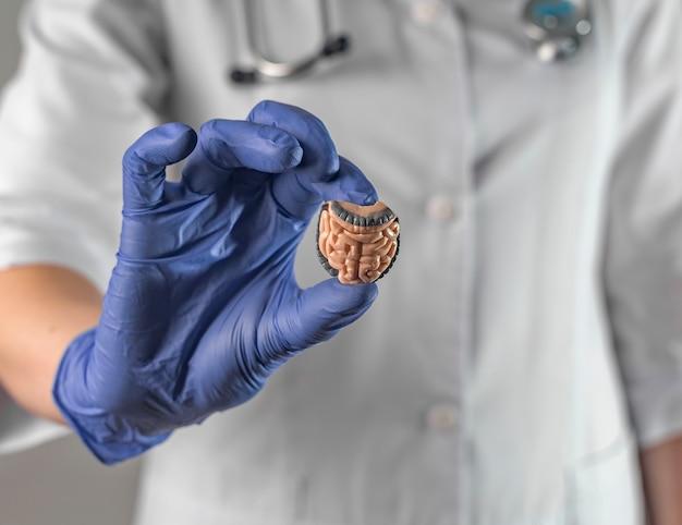 Символ кишечника в руках женщины-врача анатомического внутреннего органа кишечника