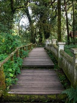 Inthanon walk way